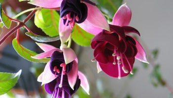 Растения – талисманы богатства