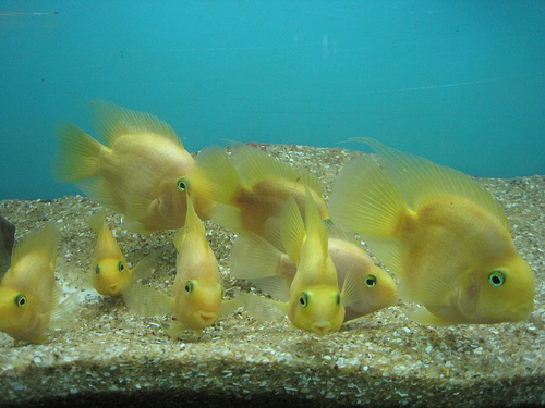 рыбки - денежный талисман