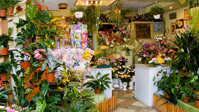 Проект открытия цветочного бизнеса