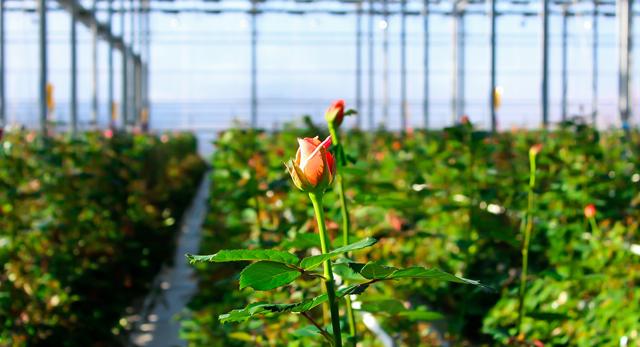 заработать на выращивании цветов
